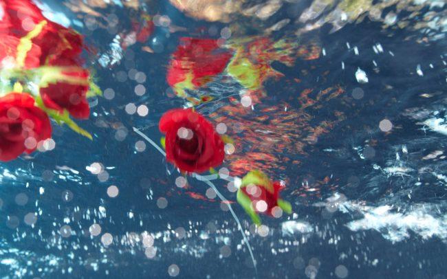 «Candy Roses I» | 122cm x 60cm | © Gaby Fey